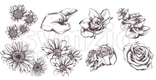 Vintage flowers set collection line art Vector. Sunflower, roses and lily illustration
