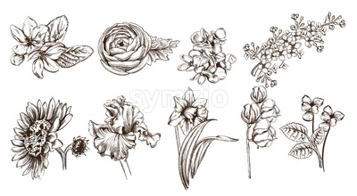 Vintage flowers set line art Vector. Sunflower, roses and narcisus illustration Stock Vector