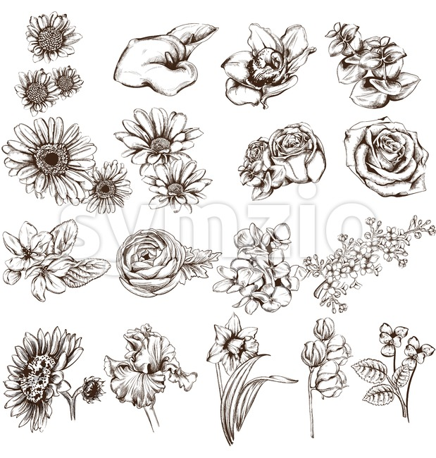 Vintage flowers set line art Vector. Sunflower, roses and narcisus illustrations