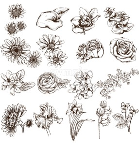 Vintage flowers set line art Vector. Sunflower, roses and narcisus illustrations Stock Vector