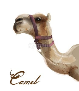 Camel Vector watercolor. Cute animal isolated on white background Stock Vector