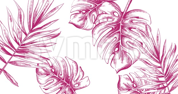 Palm leaves Tropic fsummer background Vector line art. Vintage style Stock Vector