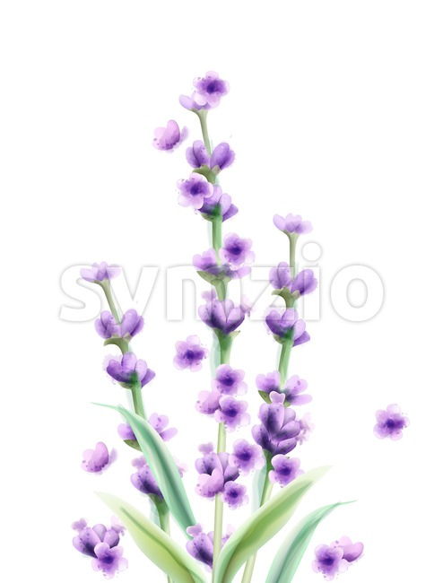Lavender Vector watercolor card isolated Summer floral bouquet Stock Vector