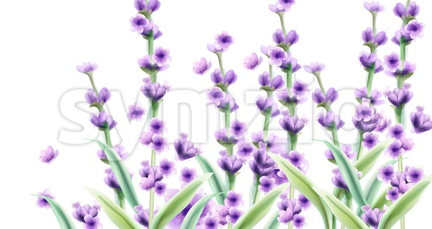 Lavender Vector watercolor card backgrounds. Summer floral bouquet Stock Vector
