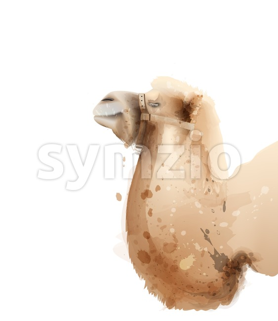 Camel Vector watercolor isolated on white. Icon Painted style illustration Stock Vector