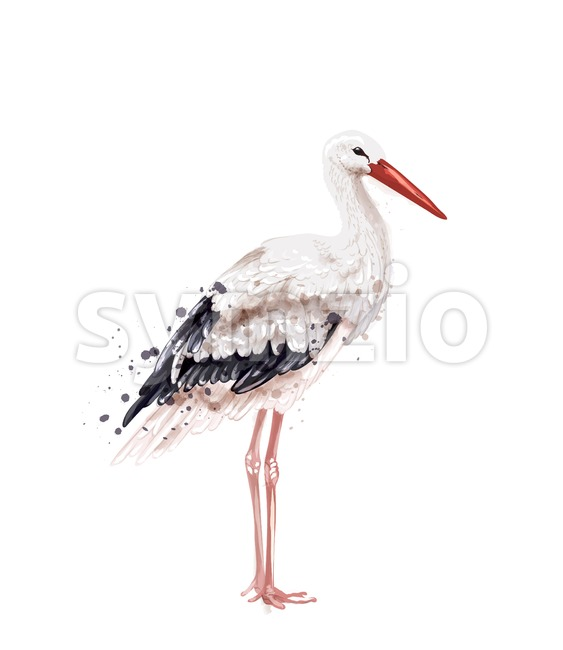 Stork Vector watercolor isolated on white. Icon Painted style illustration Stock Vector