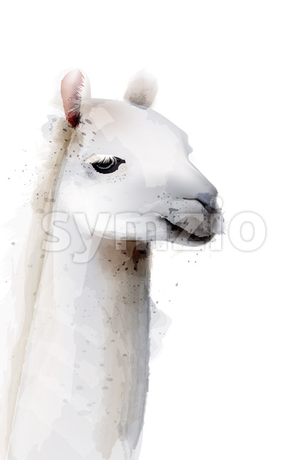 Lama Vector watercolor isolated on white. Painted style illustration Stock Vector