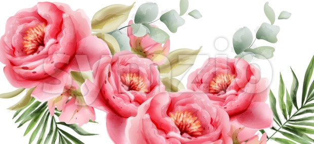 Pink peonies vector watercolor. Summer exotic floral background