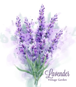 Lavender bouquet watercolor Vector. Delicate floral decor. Spring summer banner template Stock Vector