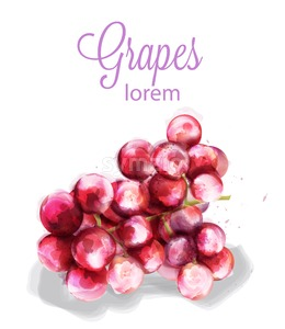 Grapes Vector watercolor. Summer fruits icon. label template Stock Vector