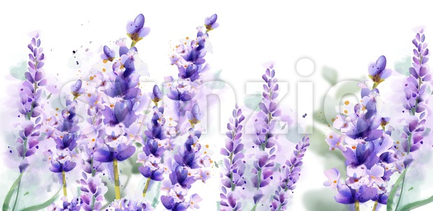 Lavender watercolor background Vector. Delicate floral bouquet on white background. Spring summer banner template Stock Vector