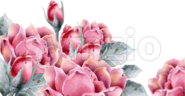 Roses flowers Vector watercolor Delicate floral decor background