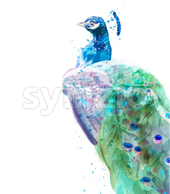 Peacock isolated Vector watercolor. Summer exotic birds decor Stock Vector