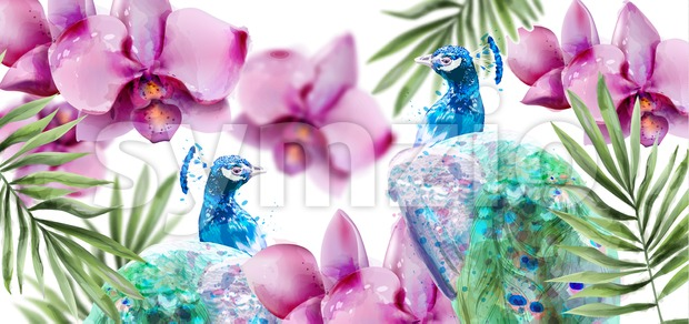 Peacock and Orchid flowers Vector watercolor. Summer floral pattern background