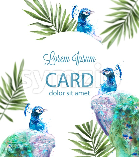 Peacock tropic background Vector watercolor. Summer exotic card Stock Vector