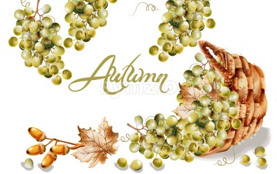 Autumn card Vector watercolor. Fall harvest grapes basket illustration Stock Vector