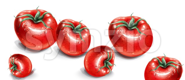 Tomatoes watercolor vector. Fresh tomatoes with water drops. Menu shop template