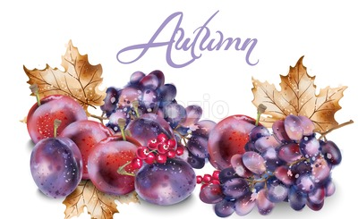Grapes and plums vector watercolor. Autumn fall harvest background Stock Vector