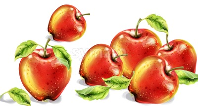 Apples vector watercolor. Colorful fruits background. Autumn harvest illustration Stock Vector