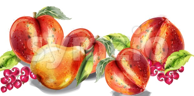 Apple, pear and peach Vector watercolor set. Colorful fruits detailed painted style