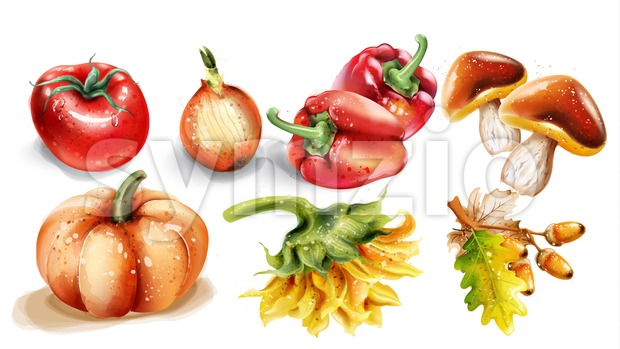 Pumpkin, mushrooms and vegetables Vector watercolor. Autumn fall harvest set Stock Vector