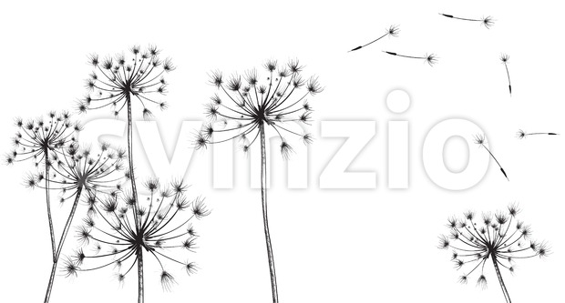 Dandelion flowers Vector line art. Floral ink texture summer decor background