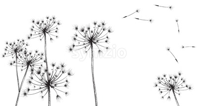 Dandelion flowers Vector line art. Floral ink texture summer decor background Stock Vector