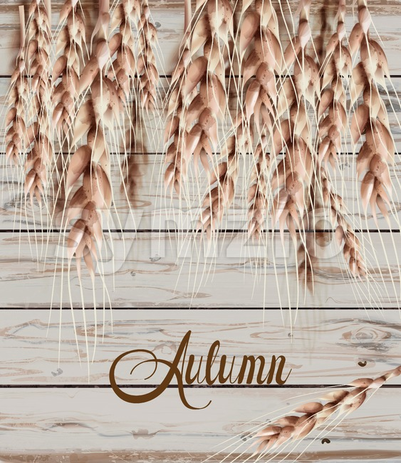 Wheat ears Autumn fall card. Vintage rustic poster. Wooden texture background Stock Vector