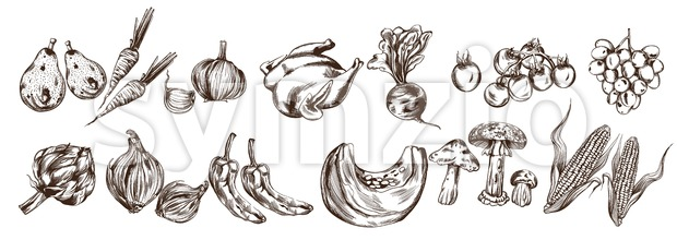 Autumn veggies set collection Vector line art. Artichoke, pumpkin, corn, tomatoes fall fresh harvest