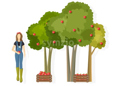 Woman farmer collecting apple harvest Vector. Fall season template harvesting layout project Stock Vector