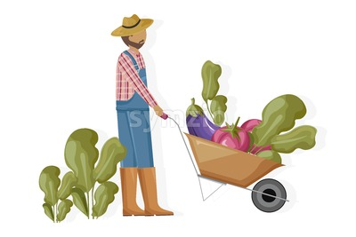 Man harvesting and transporting eggplant and beet Vector flat style. Farmer collecting harvest with a wheelbarrow Stock Vector