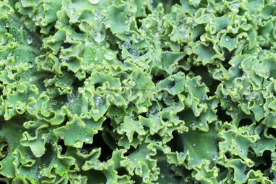 Green kale cabbage composition, close up macro Stock Photo