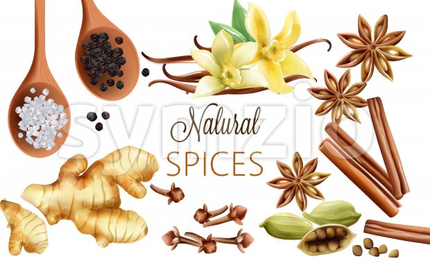 Natural spices composition with salt, black pepper, ginger, cinnamon sticks and vanilla. Vector set