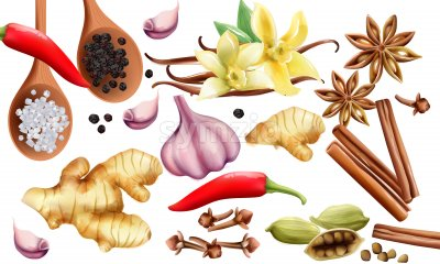 Natural spices and vegetables composition with onion, garlic, salt, red and grounded black pepper, ginger, cinnamon sticks and vanilla. Vector set Stock Vector