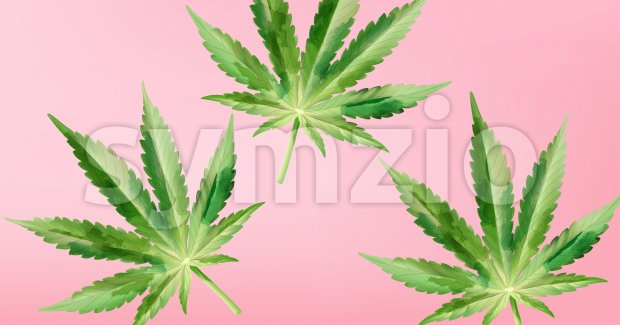 Watercolor marijuana cannabis leaves on purple background. Vector