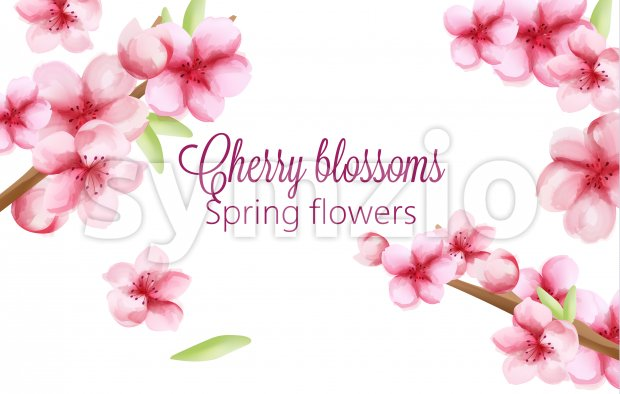 Watercolor cherry blossoms spring flowers on stem with green leaves. Vector Stock Vector