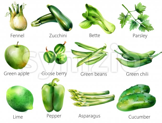 Set of green vegetables in watercolor style. Fennel, zucchini, bette, parsley, apple, goose berry, beans, chili, lime pepper asparagus cucumber Vector Stock Vector