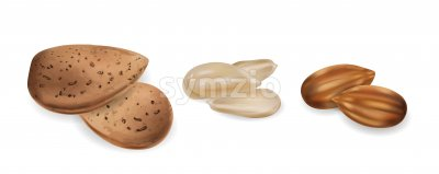 Almond nuts raw and peeled Vector realistic set. 3d detailed illustration Stock Vector
