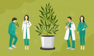 Doctors investigating cannabis leaves growing in a pot. Vector Stock Vector