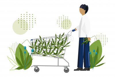 Young man shopping cannabis leaves in a trolley cart. Vector Stock Vector