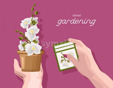 Woman holding with hands a sign with orchid flower description. About gardening idea. Vector Stock Vector