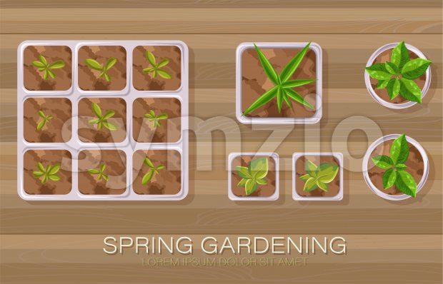 Spring gardening pot with flowers and tea leaves growing. Wooden background. Vector Stock Vector
