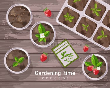 Spring gardening pot with strawberries, flowers and tea leaves growing. Wooden background. Vector Stock Vector