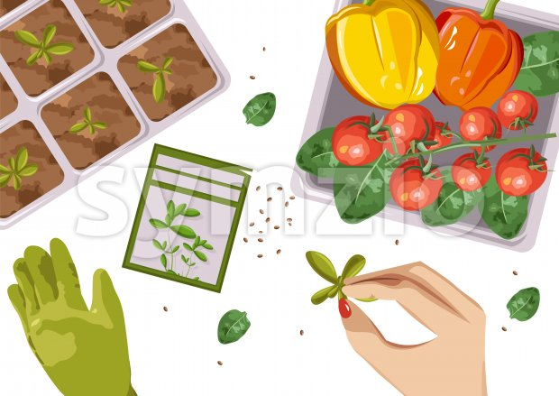 Woman hands growing Ecological products in pot. Composition with branch of red tomatoes, spinach and cucumbers. Place for text. Vector Stock Vector