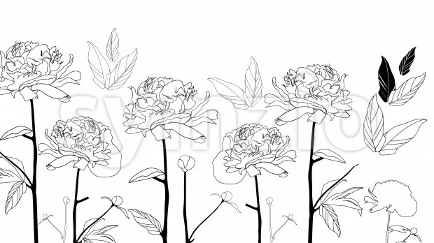 Line art black and white peonies flowers on isolated background. Vector