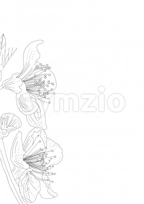Line art lily flowers on branch with leaves. Place for text. Vector Stock Vector