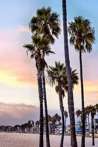 Palms on Santa Monica State beach at sunset in Los Angeles, USA Stock Photo