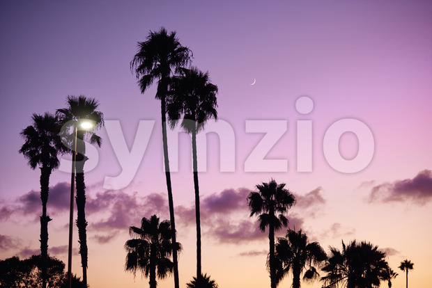 Beach with palm trees silhouette and purple sky on background. San Diego, California Stock Photo