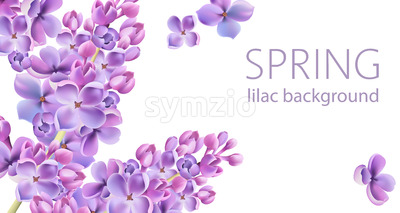 Springtime Lilac flower background with place for text. Vector Stock Vector