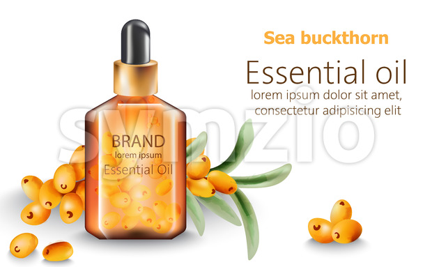 Bottle of sea buckthorn essential oil with place for text. Vector Stock Vector
